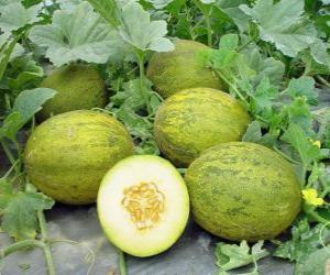 Układanka Melon