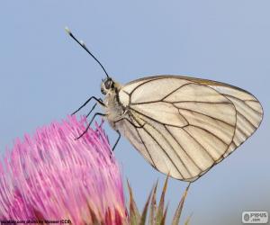 Układanka Motyl na różowy kwiat