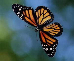 Układanka Motyl pływających pod