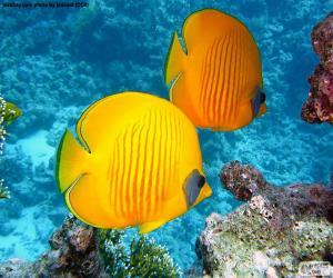 Układanka Motyl ryb cytryna