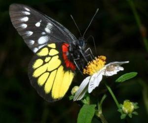 Układanka Motyl