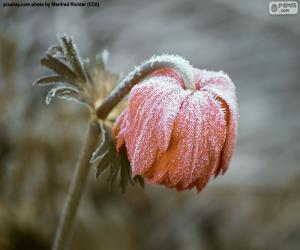 Układanka Mrożone kwiat