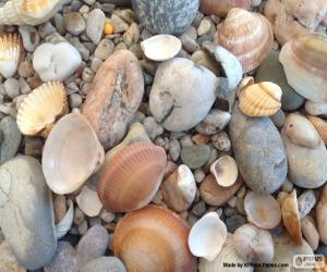 Układanka Muszle i kamienie morze