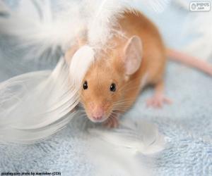 Układanka Myszy i piór