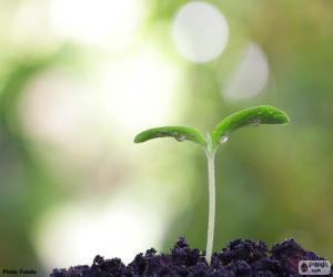 Układanka Narodziny roślin