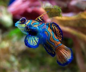 Układanka Nicea tropikalna ryba