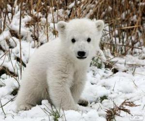 Układanka Niedźwiadek