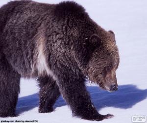 Układanka Niedźwiedź Grizzly