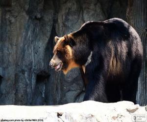 Układanka Niedźwiedź himalajski