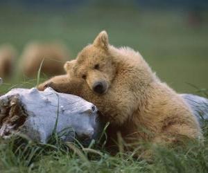 Układanka Niedźwiedź na pniu