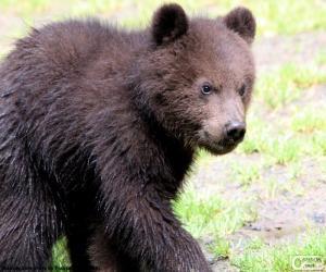 Układanka Niedźwiedź noworodek