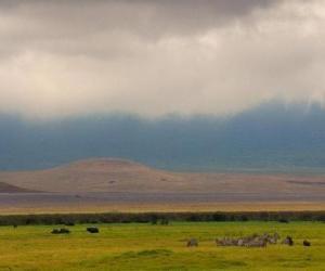 Układanka Norongoro - Tanzania -