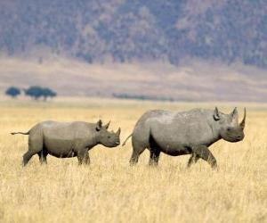 Układanka Nosorożec biały w sawannie