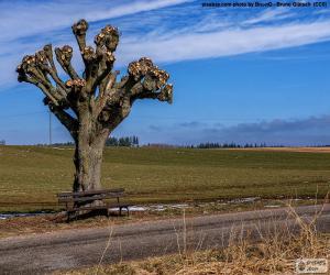 Układanka Obcinanie drzew