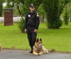 Układanka Oficer policji z psem policji