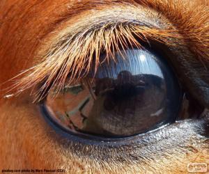 Układanka Oko konia