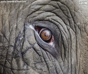 Układanka Oko słonia