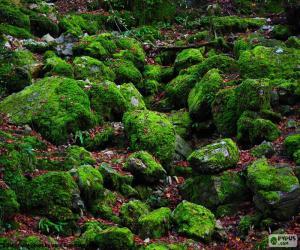 Układanka Omszałych kamienie