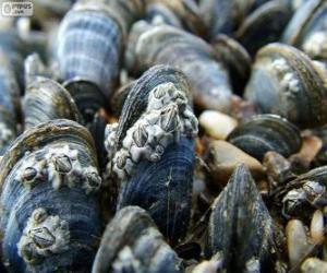 Układanka Omułek, morskich zwierząt