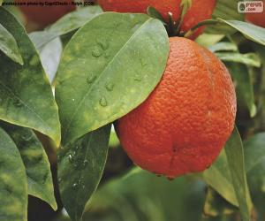 Układanka Orange w drzewie