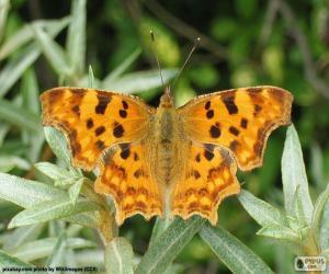 Układanka Otwarte skrzydło motyla