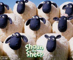 Układanka Owce stada Shauna