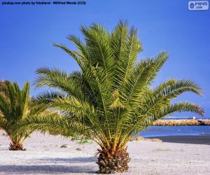 Układanka Palmy na plaży