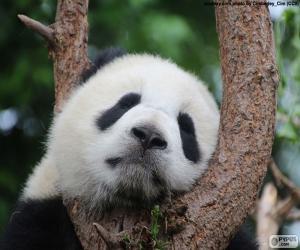 Układanka Panda, spanie