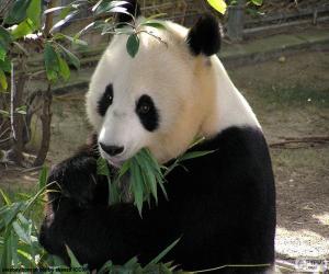 Układanka Panda wielka