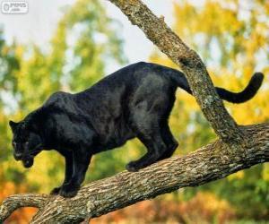 Układanka Pantera czarna na gałęzi drzewa