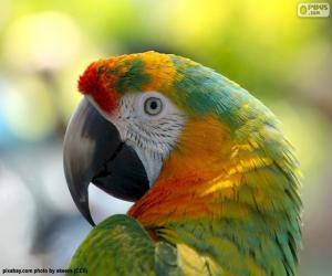 Układanka Papuga głowy