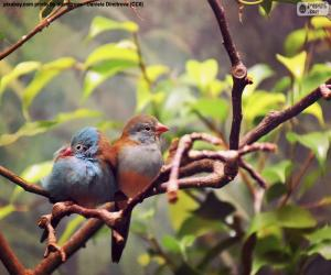 Układanka Para ptaków