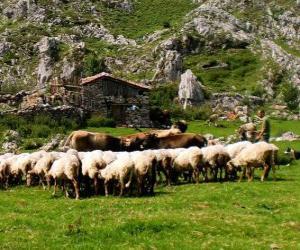 Układanka Pasterz tendencję jego stada