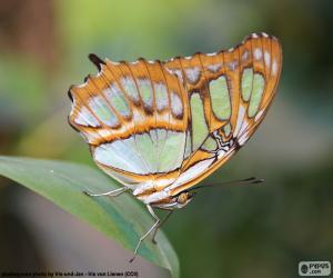Układanka Piękny motyl