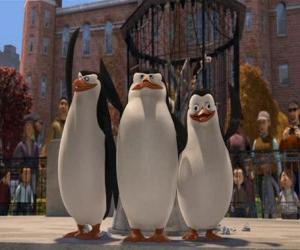 Układanka Pingwiny na Central Park Zoo