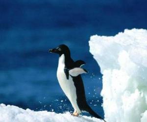 Układanka Pingwiny nad śnieg Antarktyda