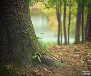 Układanka Pnia drzewa
