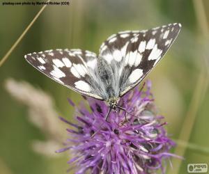 Układanka Polowiec szachownica motyl