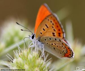 Układanka Pomarańczowy motyl