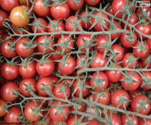 Układanka Pomidor w oddziale