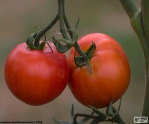 Układanka Pomidory