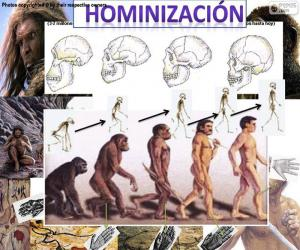 Układanka Proces hominizacji