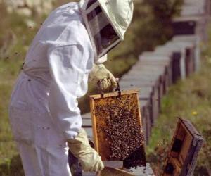 Układanka Pszczelarz pracy ze szczególnym garnitur w gałęzi do zbierania miodu