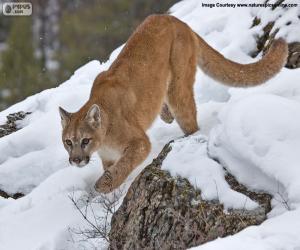 Układanka Puma chodzić