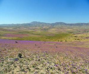 Układanka Pustyni Atacama w Chile ozdobny