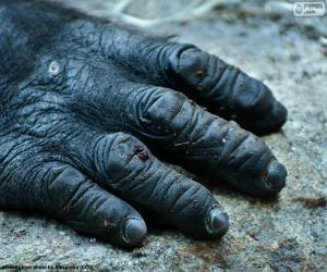 Układanka Ręka goryl