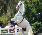 Wychowany białego konia