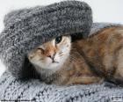 Kot i szalik