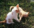 Gry Kocięta