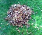 Pozbierać się opadłych liści